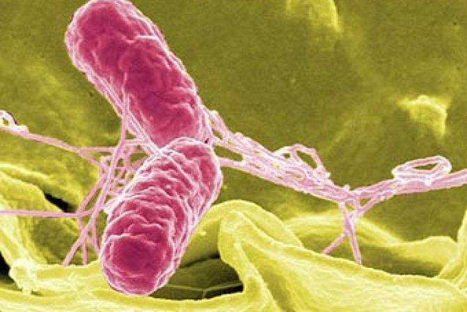 Коли, як правильно і які аналізи потрібно здати на паразитів?