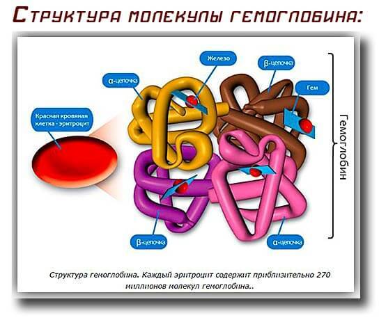 кількості гемоглобіну зниженя