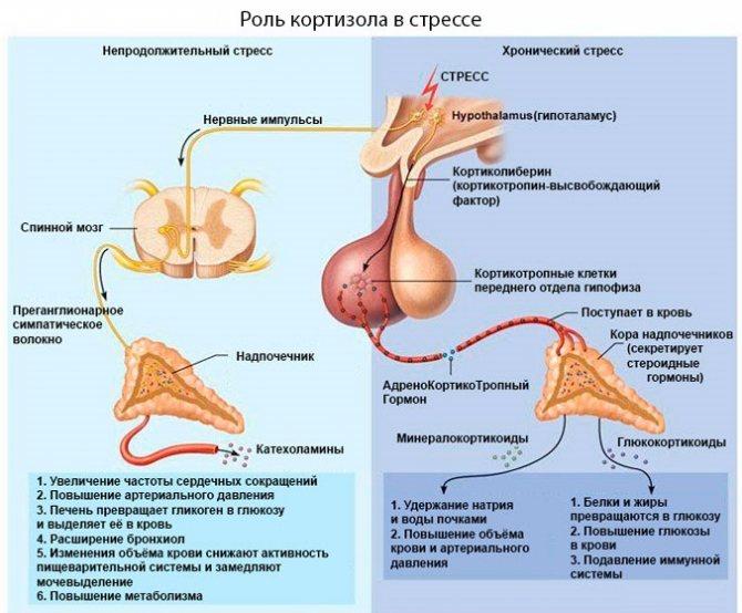 Кортизол підвищений у жінок. Причини, симптоми, наслідки, лікування в домашніх умовах