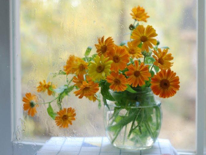Красиві квіти календули у вазі на вікні