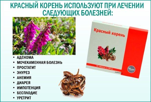 Червоний корінь. Лікувальні властивості, інструкція, як приймати таблетки, настоянку. Протипоказання і ціна