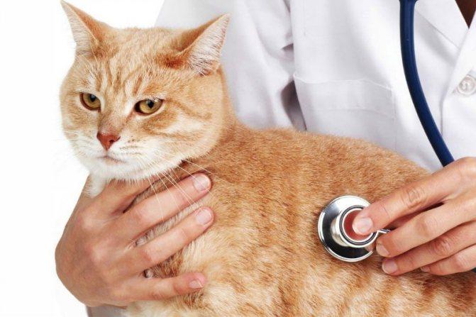 лікуємо кота