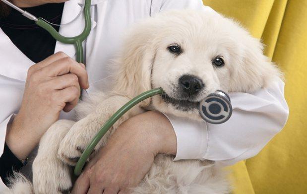 лікуємо пса