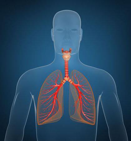 легенева плевра