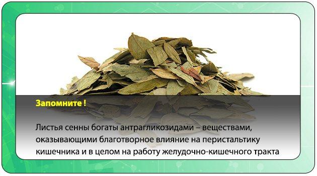 листя сіни
