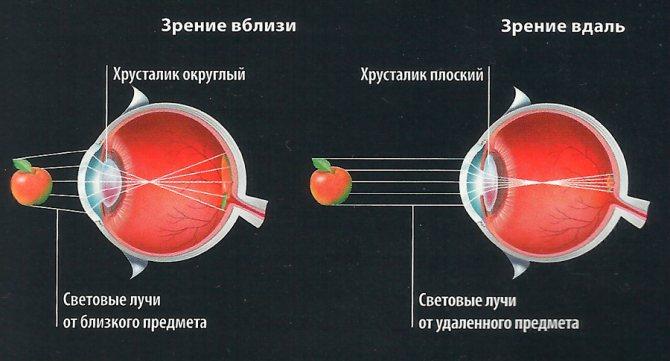 Механізм акомодації очі