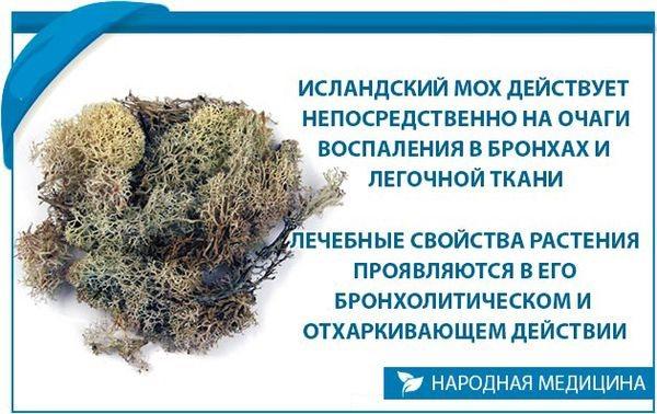 Механізм Дії моху