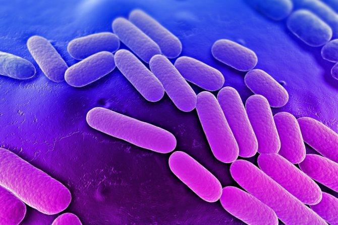 мікроорганізми