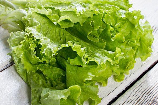 Чи можна давати листовий салат тваринам