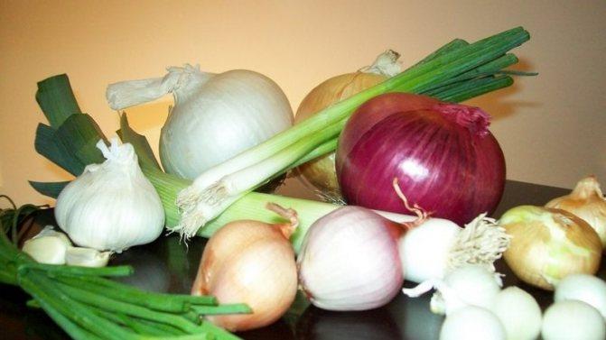 Чи можна їсти цибулю при гастриті з підвищеною або зниженою кислотністю