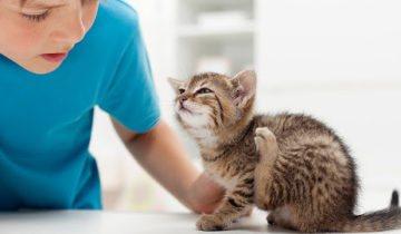 Чи можна від кішки заразитися коростою