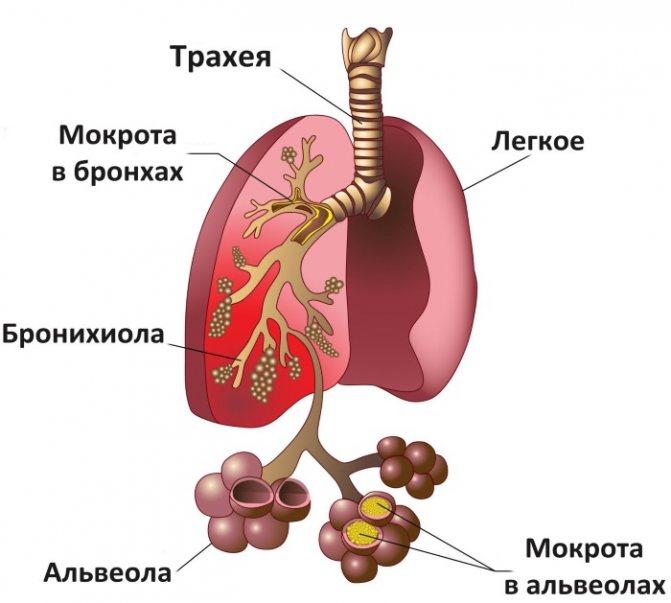 Мукалтин проти сухого і мокрого кашлю. Інструкція по застосуванню дітям і дорослим
