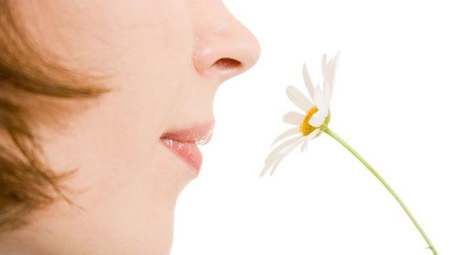 Порушення смаку і нюху. Причини порушення смаку
