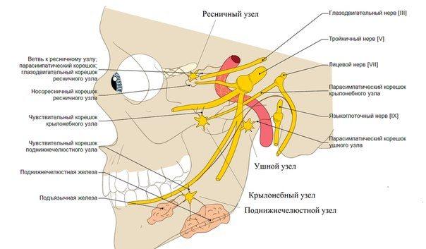 Нервові Вузли