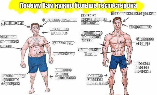норма тестостерону в чоловічому організмі