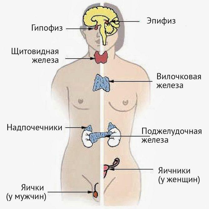 Області Вивчення ендокрінології