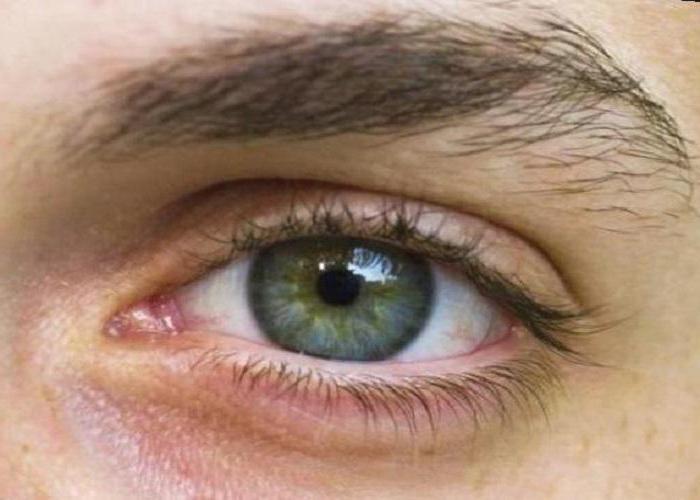 опис будови ока