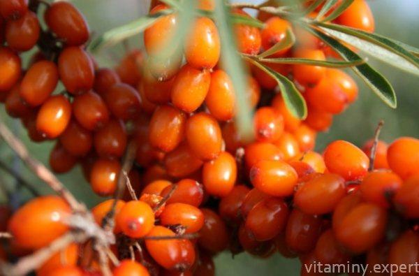 помаранчеві ягоди
