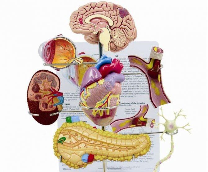 Органи-мішені при гіпертонічній хворобі