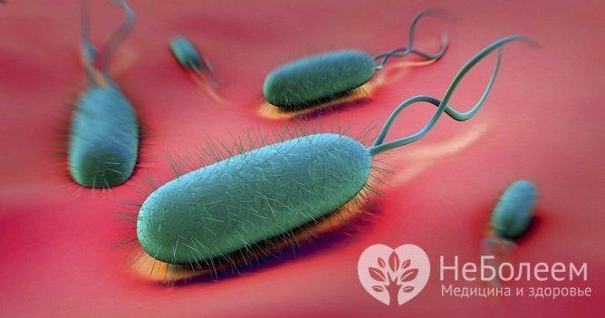 Основною причиною розвитку гастриту у дітей є інфікування бактерією H. Pylori