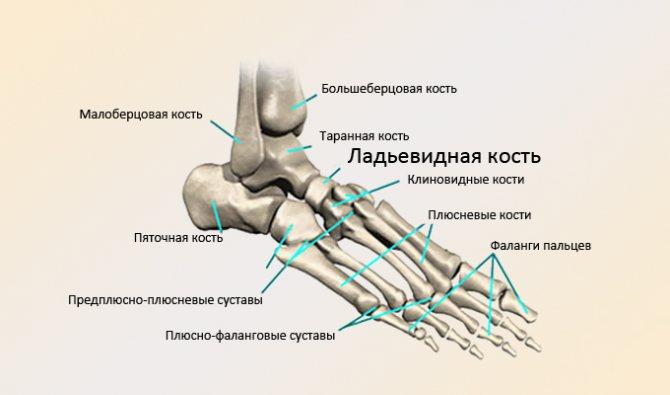 Остеохондропатия човноподібної кістки стопи діагностика і лікування
