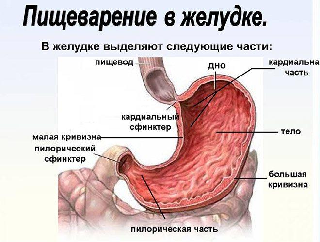 Від чого призначаються ліки Церукал: ампули і таблетки