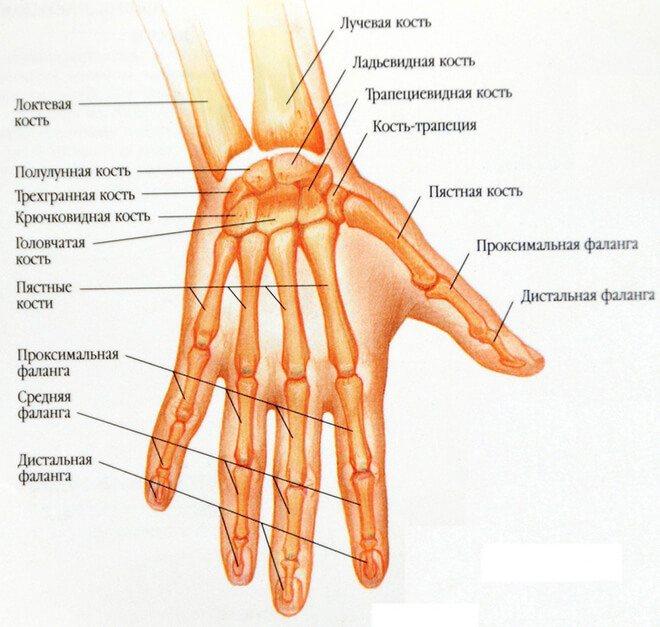 палець на руці