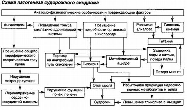 патогенез розвитку судом