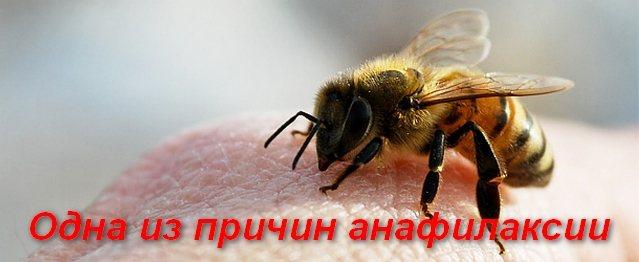 бджола сидить на шкірі людини