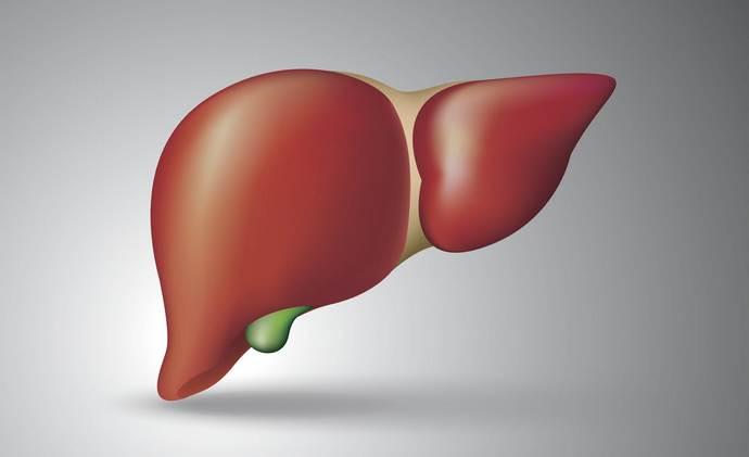 Печінка виконує ряд життєво важливих функцій.