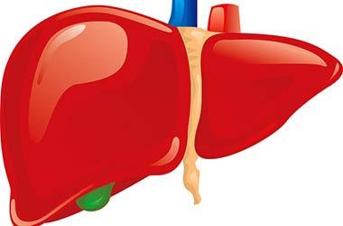 печінку
