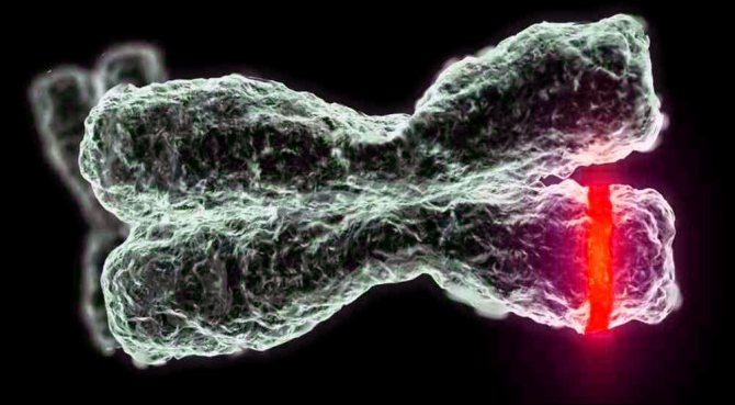 Передача гена дальтонізму у спадок