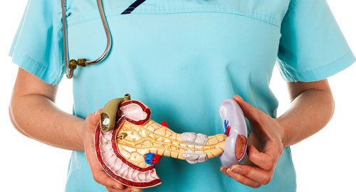 Пластмасовий макет підшлункової та жовчного міхура в руках у лікаря
