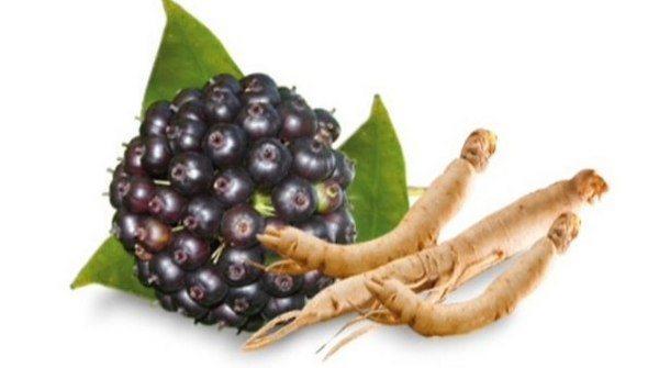 плоди і корінь елеутерококу