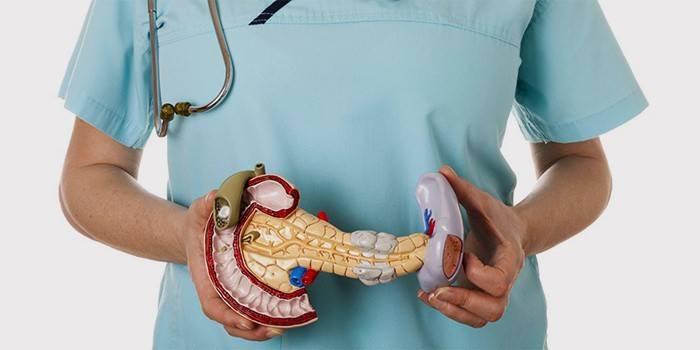 Підшлункова залоза в руках у медика