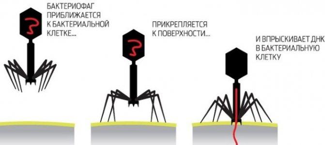 Полівалентний бактеріофаг. Інструкція по застосуванню для дітей. Ціна, аналоги