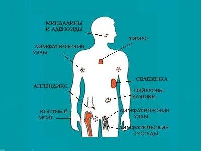 підвищені лімфоцити