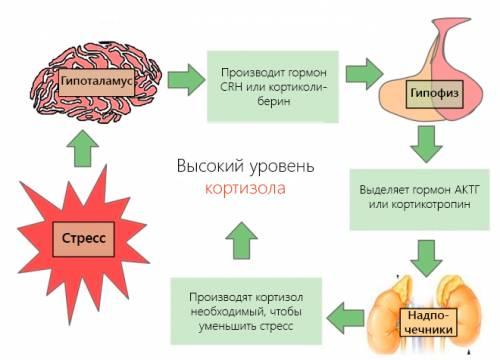 підвищений кортизол у жінок причини і наслідки