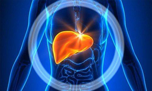 При лейшманіоз у людини збільшуються печінка