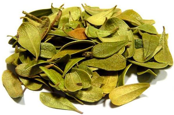 При певному досвіді листя мучниці можна відрізнить від брусничної за формою - у мучниці більш вузький держак і широкий зовнішній край листа.