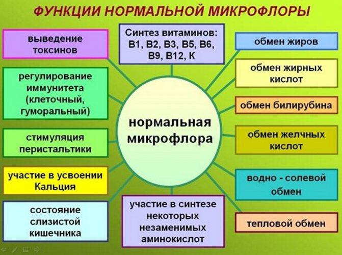 приклад меню