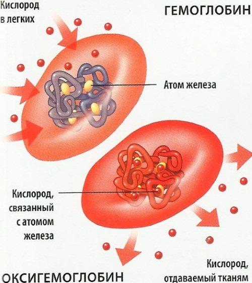 Продукти, що підвищують гемоглобін у крові у дорослих, дітей, при вагітності, осіб похилого