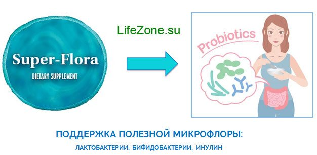 Продукти з пробіотиками та інулін підвищують чисельність корисних біфідо-і лактобактерій