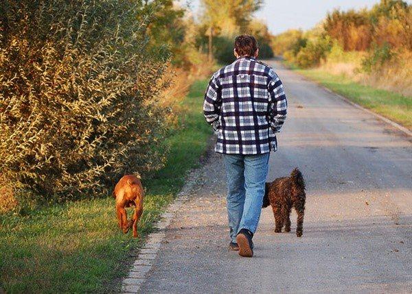 Профілактичні заходи дозволять вам запобігти розвитку у собаки хвороби, що обумовило підвищення рівня цікавить нас ферменту в крові собаки