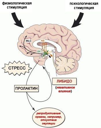 Пролактин у чоловіків.  Норма гормону за ВІКОМ, таблиця, что означає підвіщеній, причини, як знізіті