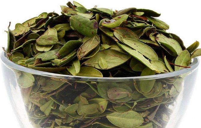 Прострочені листя брусниці