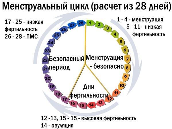 Розрахунок менструального циклу