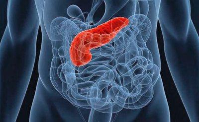 Розташування підшлункової залоза в організмі людини