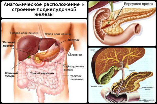 Розташування підшлункової залози