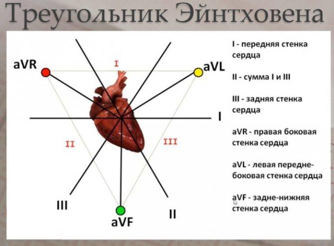 Розшифровка ЕКГ у дорослих. Норма: синусовий ритм, параметри, патології